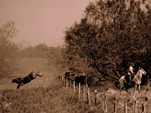 kja-cow-jump